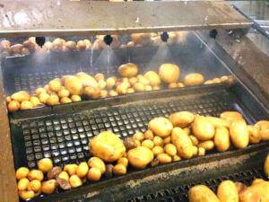 rampe de lavage de pommes de terre